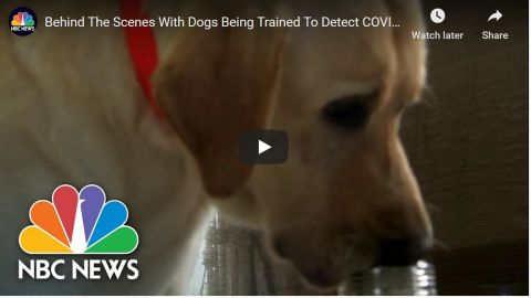 Coronavirus sniffing dogs: rapid Covid testing in the courthouse